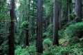 Redwood-National-and-State-Parks