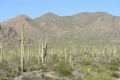 Saguaro-National-Park